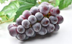 痛ましいブドウ原因の窒息事故から学ぶべきこと