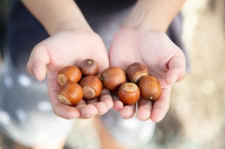 秋を楽しむ!【1歳児向け】木の実遊びのアイデア