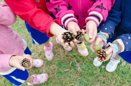 秋の保育におすすめ! 松ぼっくりを使った遊び7選